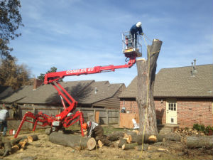 5844 E. 58th:Dying Maple Tree Removal