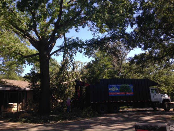 Rickert Tree Service Tree Removal