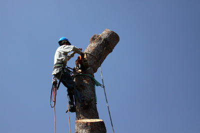 Tree-Removal-in-broken-arrow