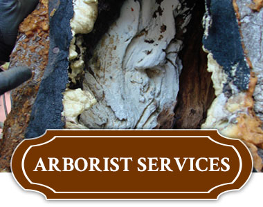 Arborist Services in Tulsa