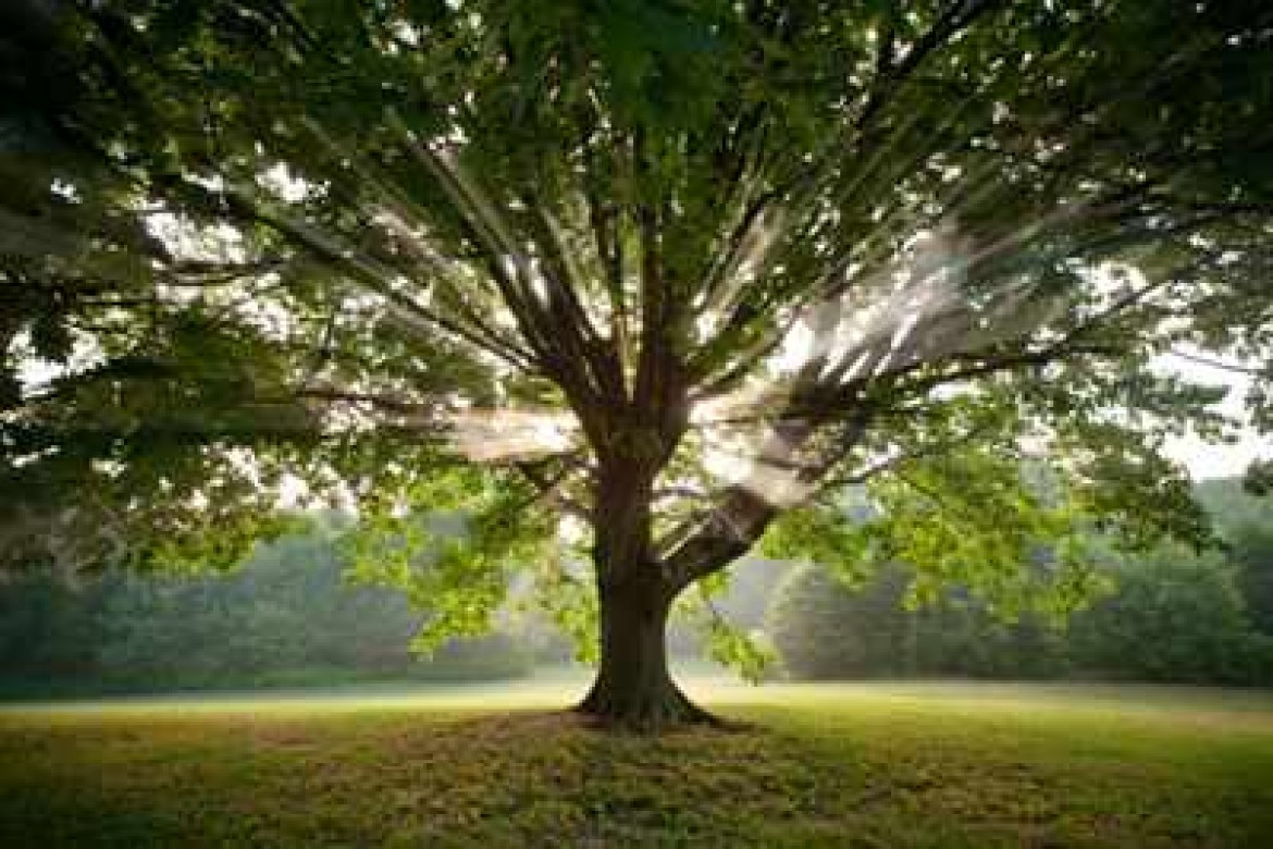 Why You Want A Tulsa ISA Certified Arborist