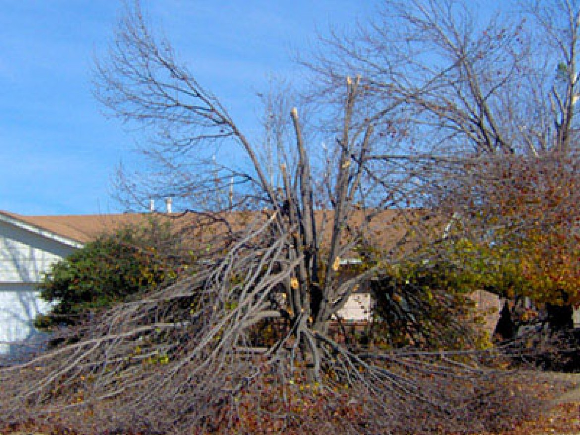 Different Forms of Tree Damage