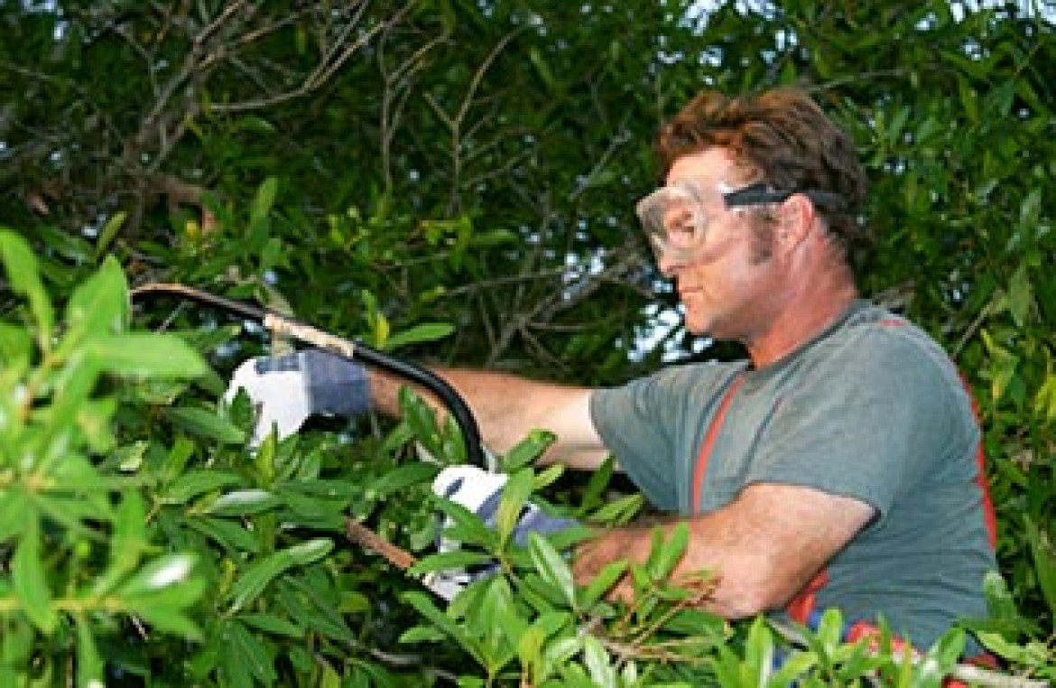 What Is A Certified Arborist?