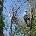 Protect Your Tulsa Home By Trimming Your Trees