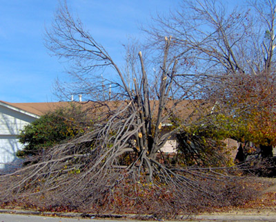 emergency-tree-removal-tulsa-ok