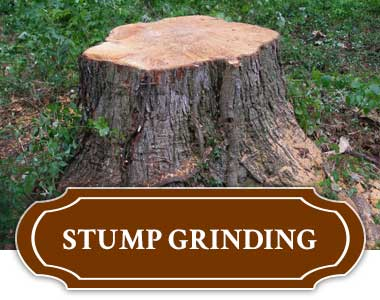 Stump Grinding in Tulsa