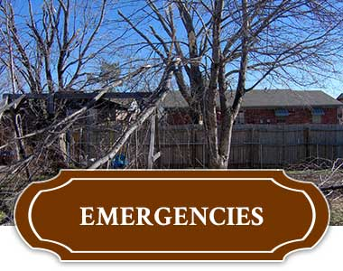 Emergency Tree Removal In Tulsa