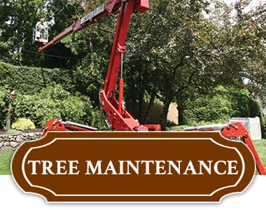 Tree Maintenance Services - Tulsa