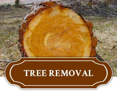Tree Removal In Tulsa