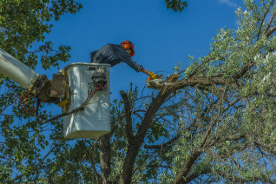 tree-services-in-broken-arrow