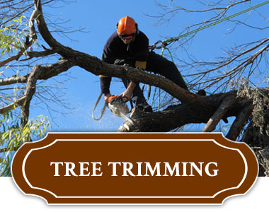 Tree Trimming Services - Tulsa