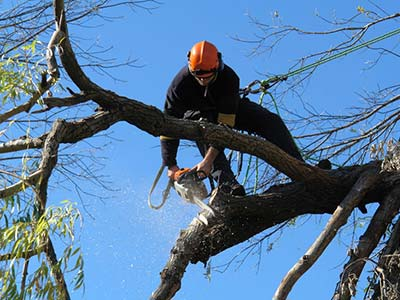 tree trimming tulsa ok
