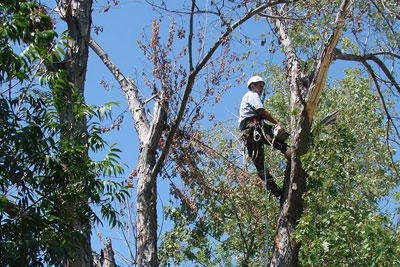 Tree Trimming Services for your Tulsa home